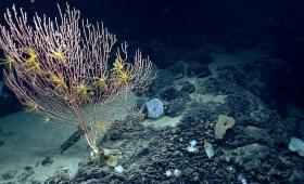 ナショナル・モニュメントって? アメリカが認めた海底の珍しい生物たち