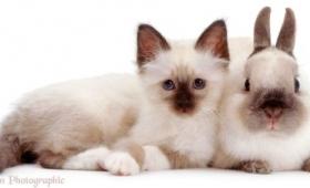 そっくりすぎてびっくり。毛色の似た異種動物たちが仲良く寄り添うツーショット画像