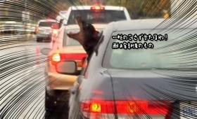 オレ・アメ・ヒトリジメ。車から雨を全て食べようとするドーベルマンのいる風景