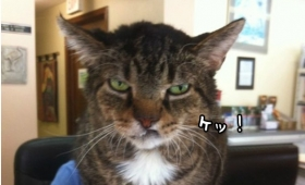 人間ごときにわかってたまるか!人間には理解不能な猫様の所業ファイル