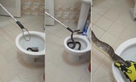 【怖すぎ】トイレの便器から衝撃的な「生物」が飛び出していると話題に