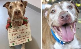 280日後のハッピーエンド。保護施設で9か月以上里親を待ち続けていた犬がついにあたたかい家族のもとへ(アメリカ)