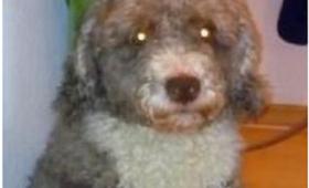 【んなあほな】この犬を「羊」だと言い張る男!なんと警察騒動にまで発展