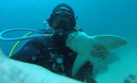 【危険じゃ!?】サメと人間の厚き友情!なんと自らすり寄ってくるまでに!