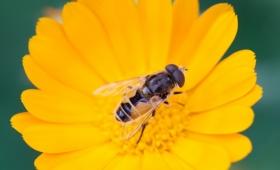 アイオワ州の小さな町が、消えゆくハチを救うプロジェクトを開始