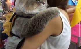 【デブすぎ】美女に抱っこされ「まんざら」でもない様子のデブ猫が可愛いと話題に