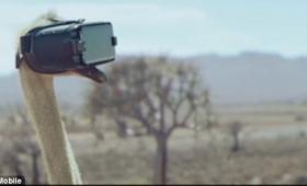 【感動的】ダチョウにVRを装着させたらどうなるのか?実際にやってみた動画が話題に