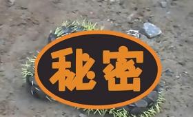 【ぎゃあ】ヘビ、何も考えず「ヤマアラシ」を食べようとした結果!