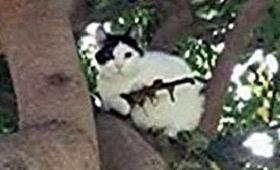 【ネコと和解せよ】オレゴン州でネコが「自動小銃」を持って武装化していると話題に