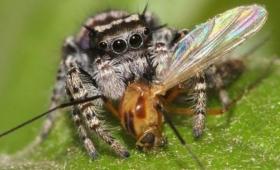 クモは全人類を食らえるほどの量の獲物を捕食している
