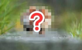 【どうしてそうなった】動物写真1500枚の中からナンバーワンに輝いた写真が「あざとすぎる」と話題に!