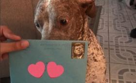 かけがえのない存在だった。離婚した後も元愛犬の誕生日にプレゼントや手紙を送り続ける男性(アメリカ)