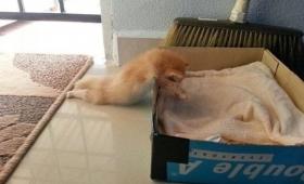 猫は寝子だもの。ポジション自由自在。ゆめゆめドリーミングな猫たちの寝姿画像