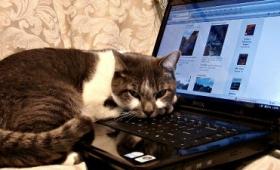 ミレニアル世代の猫たちとの付き合い方