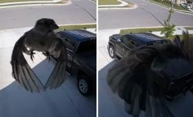 これはまさに空中浮遊!鳥と監視カメラが同期した奇跡の映像