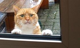 ココは誰?ワタシはどこ?初めて外の世界を体験した家猫たちの表情をご覧ください
