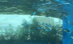 【マジでペンギン跳ぶの?】空前絶後の水族館!サンシャイン水族館に行ってきた!