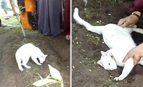 この人やさしくしてくれたの。葬儀中に突然やってきてお墓から絶対に離れようとしない野良猫、故人に生前にかわいがられていたことが判明(マレーシア)