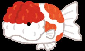 うっそ!?頭の無い金魚が3日間生存していたと話題に!