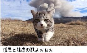 メタルと猫ってなんか合う。ブラックメタルの歌詞に猫の画像を合わせるツイッターアカウントが大人気