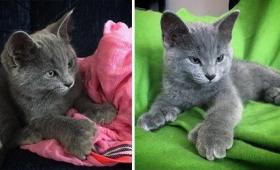 工事現場に6匹の子猫を発見。そのうちの2匹はヘミングウェイでおなじみの多指猫。全員元気に成長中(カナダ)