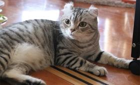 猫だってうつ病になる。うつ状態の猫が示す6つの兆候とその対処法