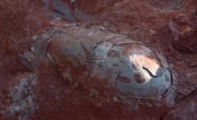 今度こそジュラシックパークの夢が叶う?保存状態の良い1億3000万年前の恐竜の卵が20個発見される(中国)