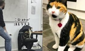 「この問題、とける者はいるか?はい君、答えて」イギリスのチェスター大学で一番人気の講師は猫。