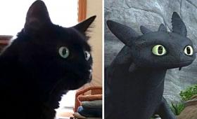 黒猫とナイト・フューリーを比べてみた。ドラゴンになりたかったかもしれない猫たち総集編