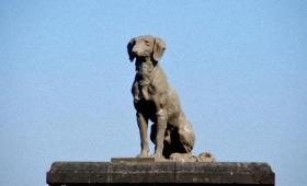 切なくて胸がきゅんとする。その忠誠心から歴史に名をのこした10匹の忠犬伝説