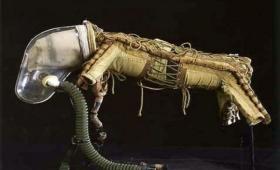 宇宙犬ライカが身に着けていたとされるコスチュームの詳細が明らかに?