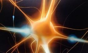 神経はどのように情報を伝達しているのか?