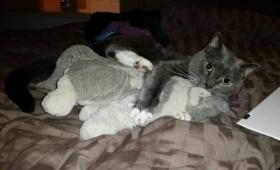 亡くなった飼い主にもらったぬいぐるみをぎゅっと抱きしめて保護施設にやってきた16歳の老猫(アメリカ)