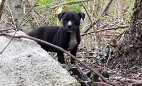 Stray Rescue~明日迎えに来るからね!母犬と子犬たちのレスキュー大作戦