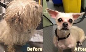トリマーが無料で動物たちのヘアカット。生まれ変わった犬たちのビフォア・アフター(アメリカ)