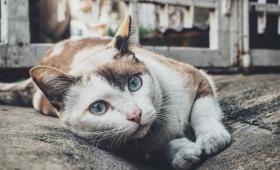 猫の寄生虫「トキソプラズマ」が失敗を恐れない