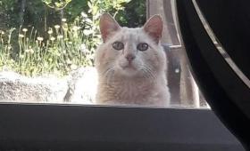 引っ越し先の家に1通の置き手紙が。それは先住人が裏庭に住み着いた足の不自由な野良猫を思いやる手紙だった(アメリカ)