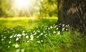 有機プロセスと人工システムを組み合わせ、太陽光でエネルギーを作るより効率的な方法が発明される(英研究)