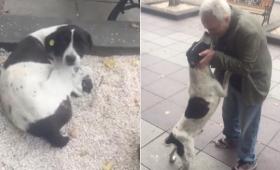 おじいさんはあきらめなかった。いなくなった愛犬を探し続けて3年後、ついに感動の再会を果たす(ジョージア)