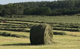 これは草生えない!1.3トンの「草」に押しつぶされるも生還した武勇伝男が話題に