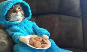 オーストラリアにあるアメリカ大使館が誤爆!架空のパジャマ猫パーティーの招待状を一斉送信しちゃった件