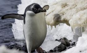 「北大西洋と南極の気候は気流や海流によってリンクしている」という研究結果