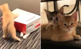 財務部門に勤務するオフィス猫が最小のコストで最高のパフォーマンスを発揮していた件(アメリカ)
