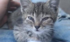 野良子猫を愛でる動画を撮っていた撮影者、やっぱり飼い主になっていた