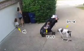 子育ては大変だわ。駐車場のシャッターを開けるのすら大惨事になるということがわかる監視カメラ映像