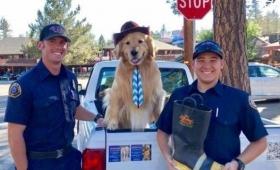 5期連続当選!ゴールデン・レトリバーの市長がカリフォルニアで発見された