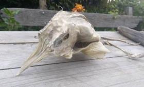 エイリアン!?地元民困惑。羽から角を生やした謎生物が海岸に打ち上げられる(ニュージーランド)