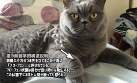 猫の解剖学的構造。前脚の片方がつま先立ちしている「フローフェン」状態下にある猫たち