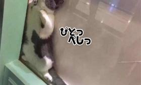 猫カフェで自分だけの安住の地を見つけた猫。入り込んだら出たくない