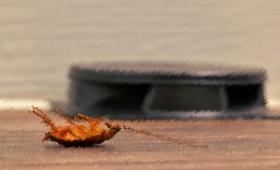 燻煙式殺虫剤の罠を回避するゴキブリ。だがその煙は他の生物に危険性(アメリカ)